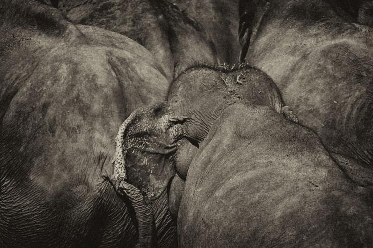 Part of the Herd - Image 0