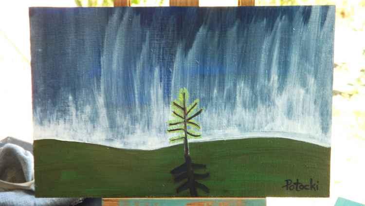 Lone Baby Pine -