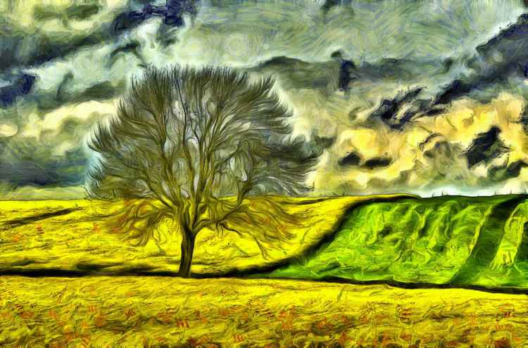 Rape Seed Fields -