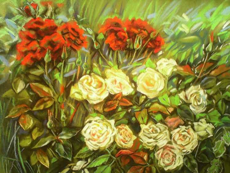Roses -