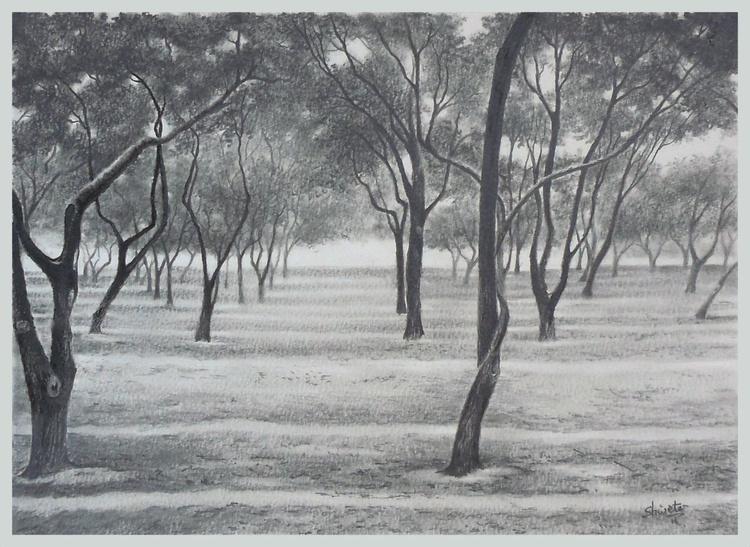 Bottlebrush Trees Pencil Drawing - Image 0