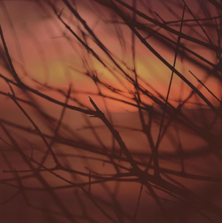 Red Bush - Image 0
