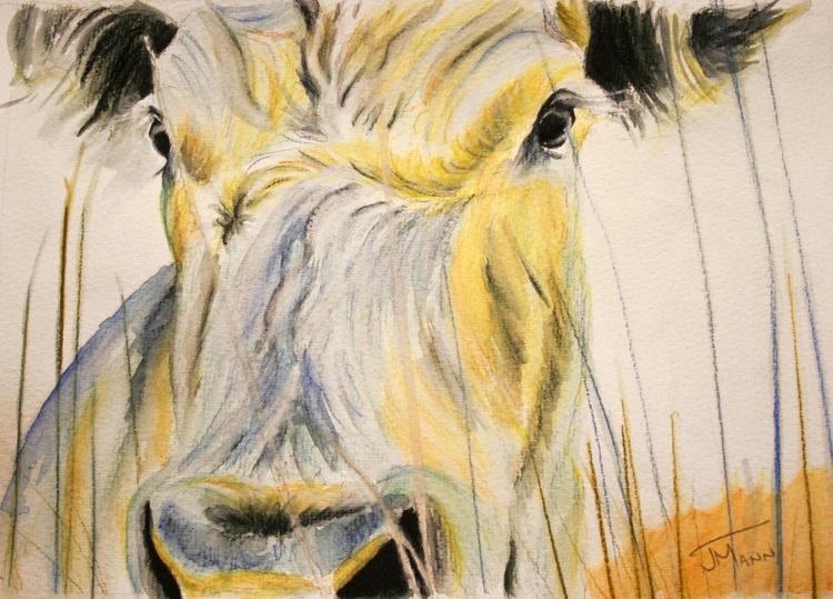 Slightly Moody Cow - Image 0