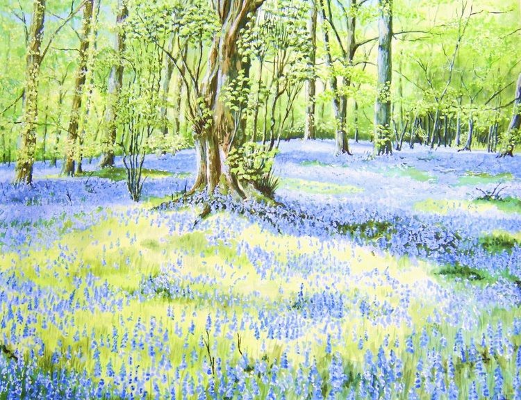 Bluebell Woods 1 - Image 0