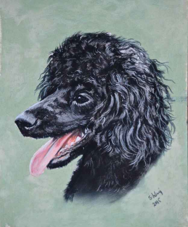 Mini black Dog Portrait  - Poodle -