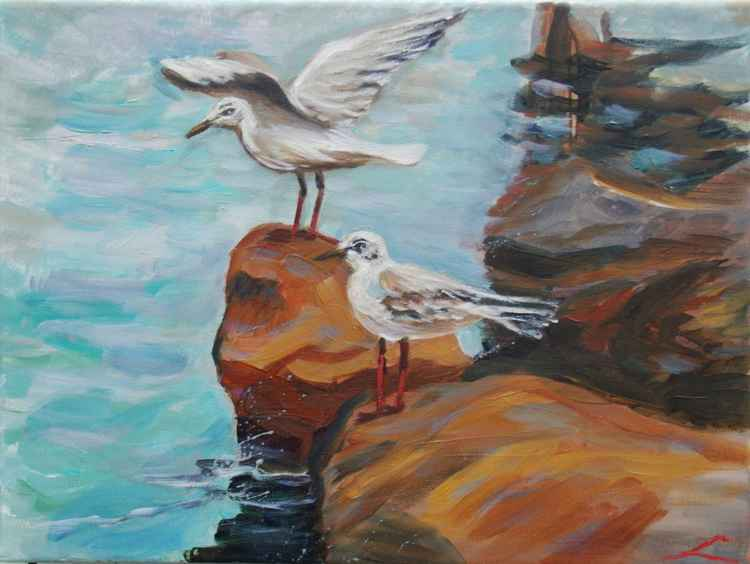 Seagulls on rocks -