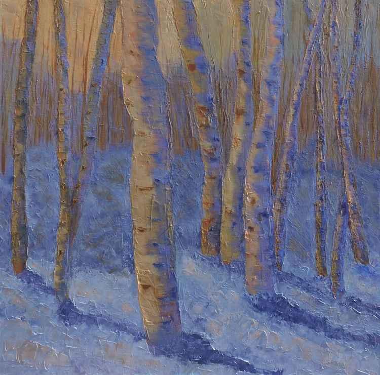 Aspen Trees in the Snow -