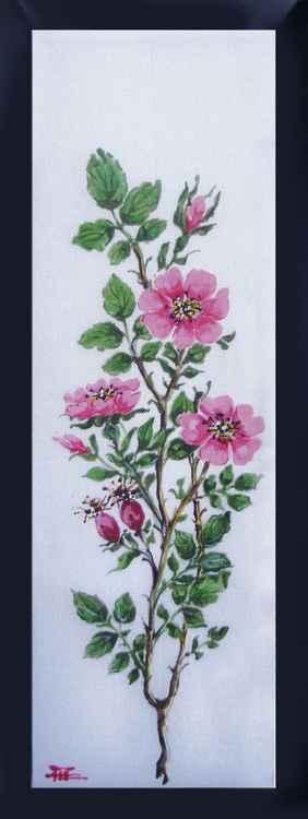 dog-rose -