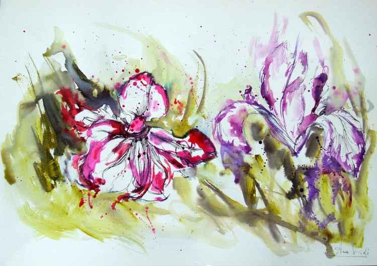 Iris flowers -
