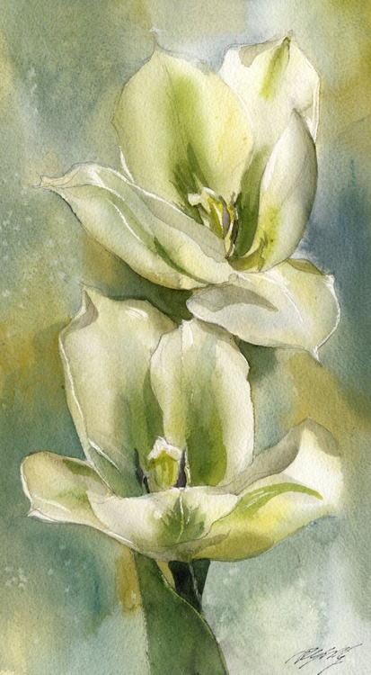green and white tulips - Image 0