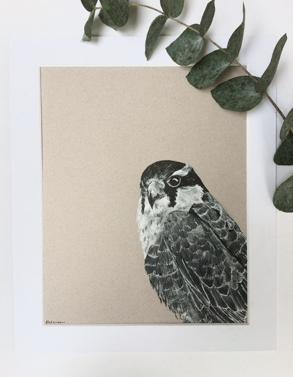 Falcon, Pen and Ink Bird Portrait - Image 0