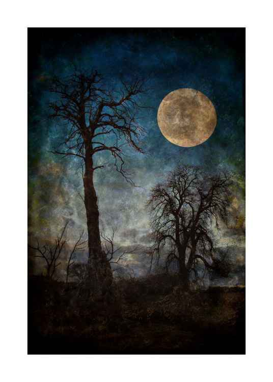 Moon & Trees.