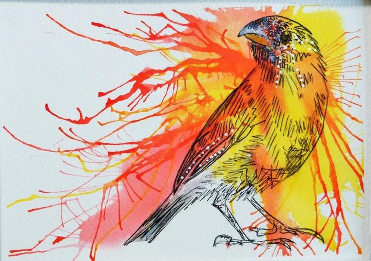 Saffron Finch - Image 0