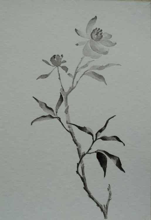 bloom -