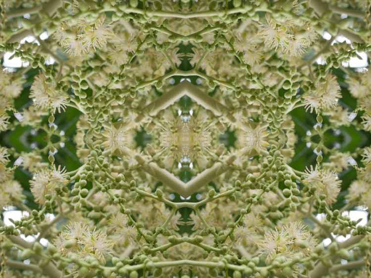 Nectar -