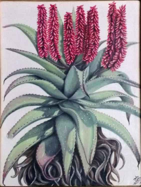 Red Aloe in Flower -