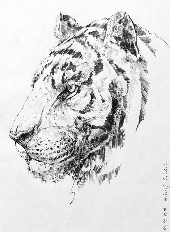 Tiger v.01 - Image 0