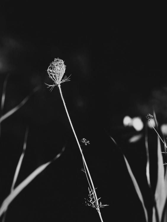 wild beauty 2 - Image 0