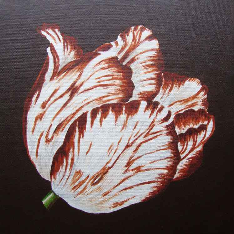 Brown Tulip 1 -