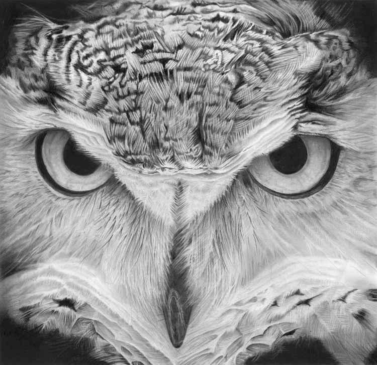 Great Horned Owl -