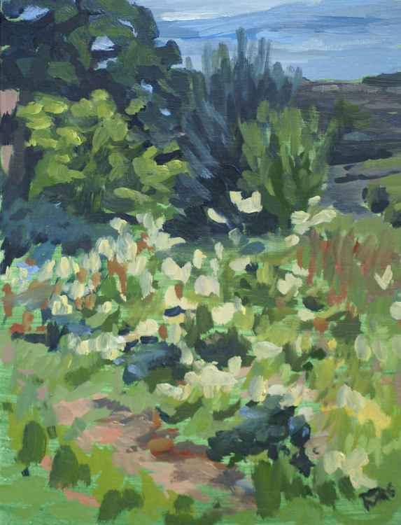 Wildflowers near Tintern Abbey -