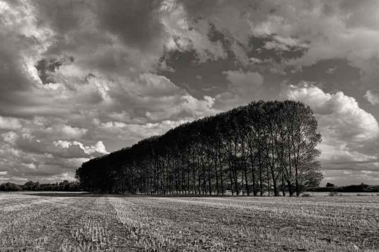 Tree Line -
