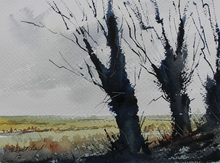 Through the trees - Image 0