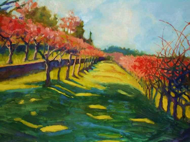 Napa Vineyard in Fall