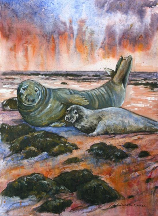 Seals at Dawn - Image 0