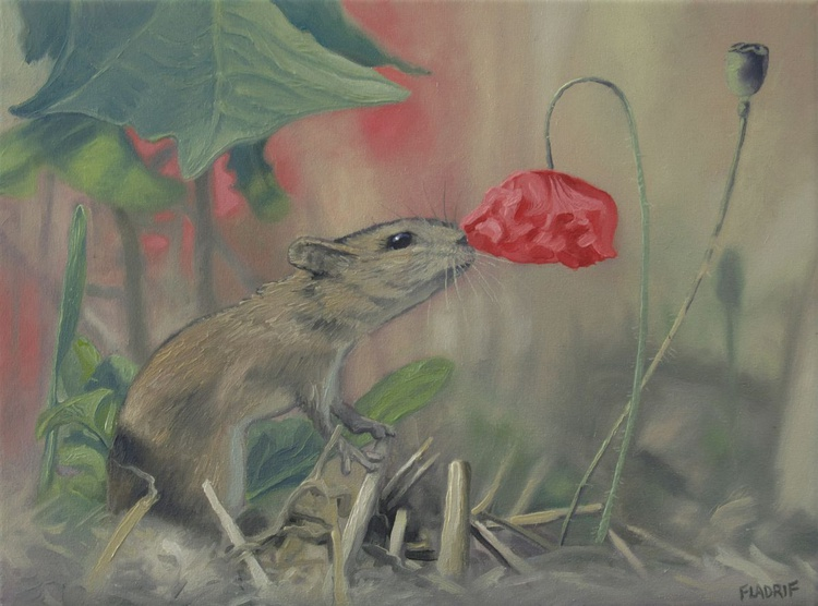 The Mouse and the Poppy - Image 0