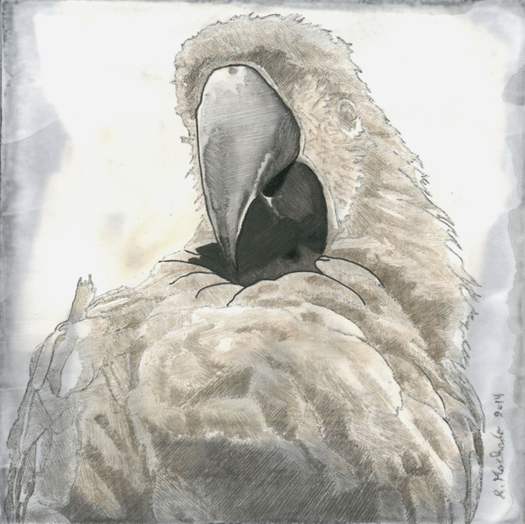 Golden Parrot I - Image 0