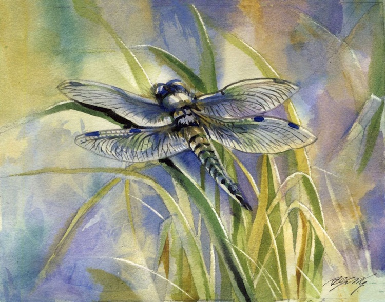 blue dragonfly - Image 0