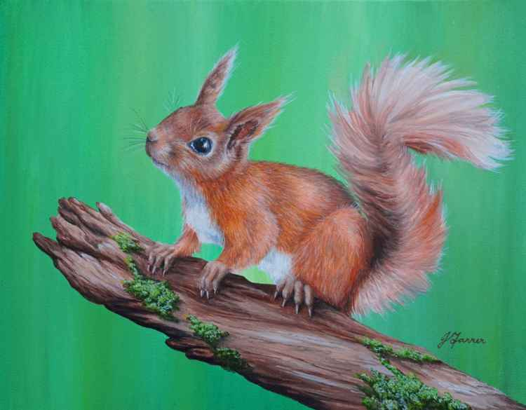 Red Squirrel on Branch -