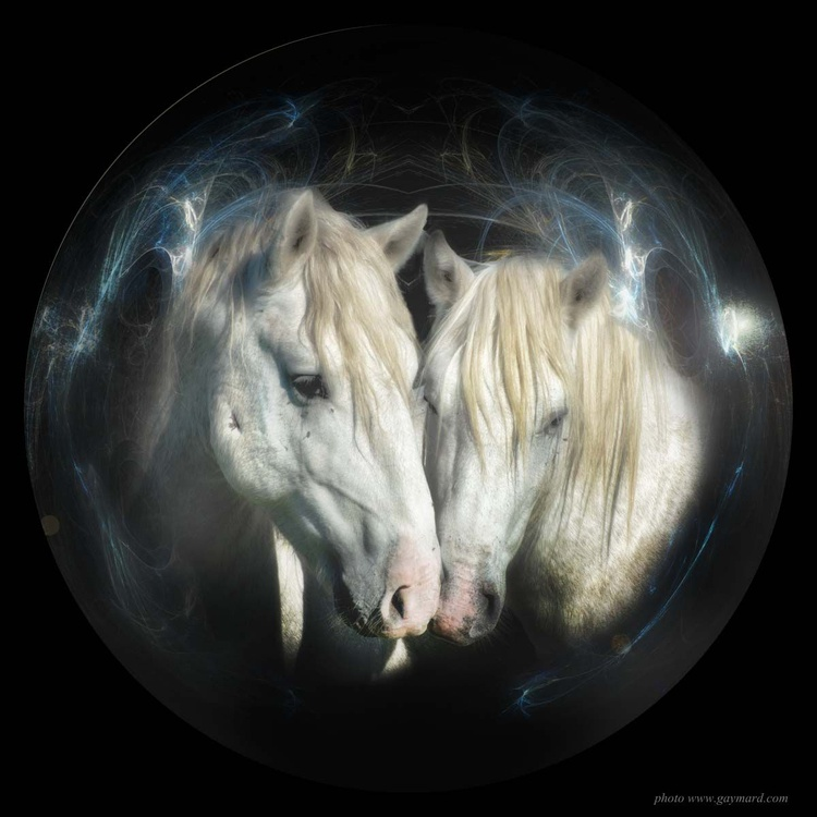The two horses from Camargue / paper - Image 0