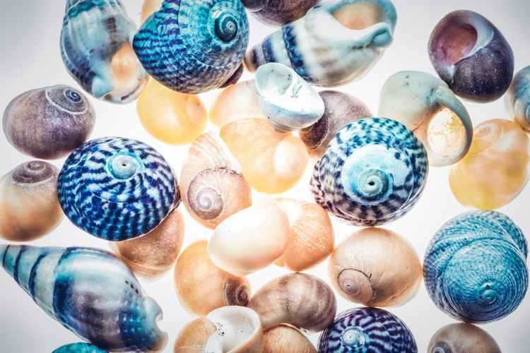 Coloured shells -
