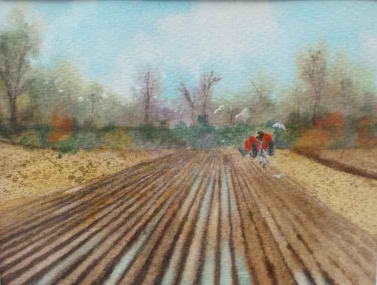 Long Field -