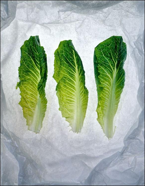 Lactuca Sativa Longifolia - Image 0