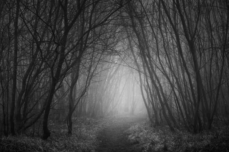 Forbidden path -