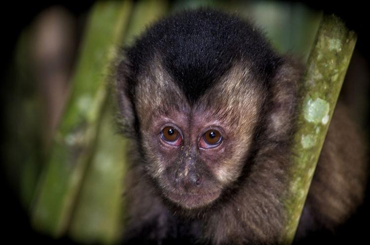 Rainforest Monkey - Image 0