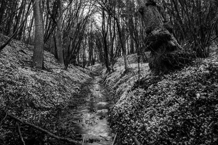 Landscape2 -