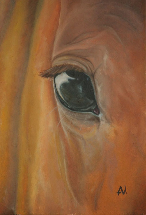 The Equine Eye - Image 0