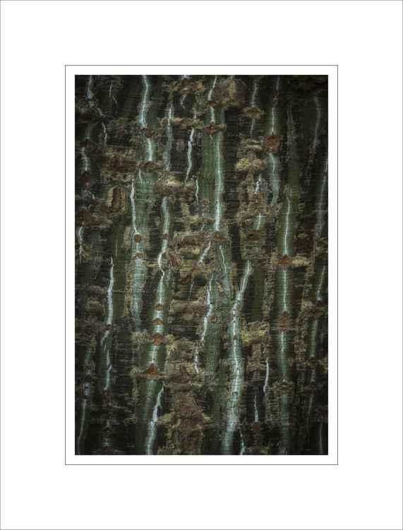 Bark Study 18 -
