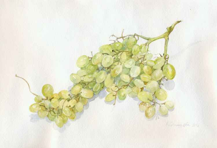 ORIGINAL WATERCOLOR A bunch of grapes -