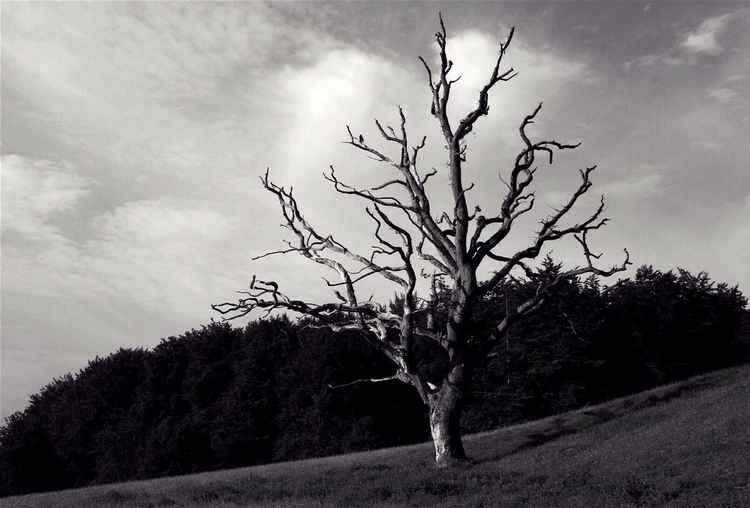 Naked tree -
