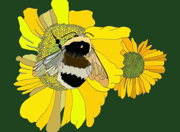 Busy Bee - Image 0