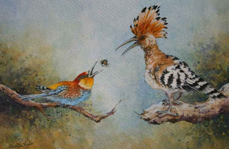 Hoopoe and the Bee - eater -