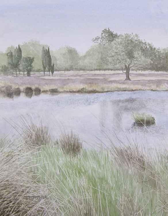Summer on the Moor -