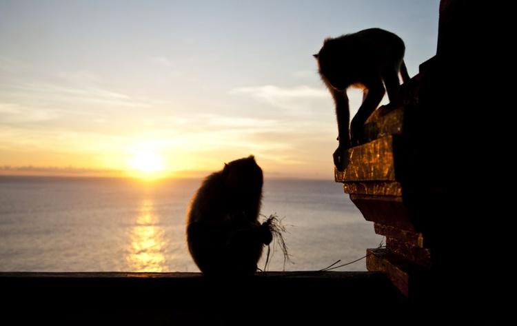 Monkey Sunset - Image 0