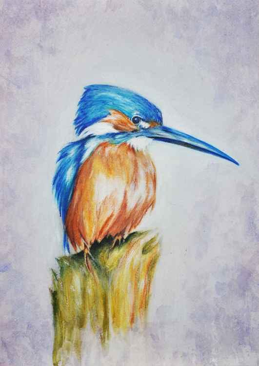 Kingfisher Study 01
