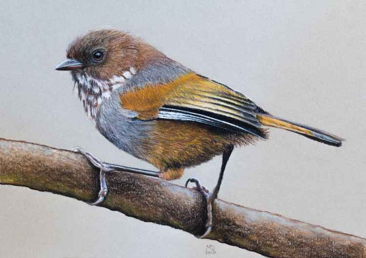 "Original pastel drawing ""Brown-throated Fulvetta"" -"